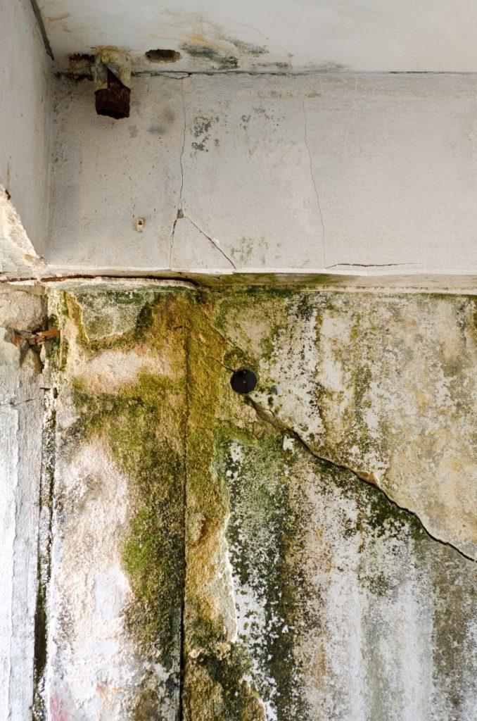 Muggsopp og fuktskader i bygg